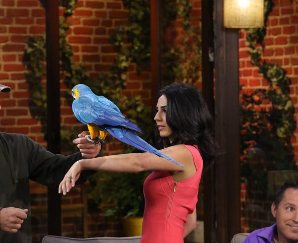 How To Overcome Fear Of Birds Hypnotist Richard Barker